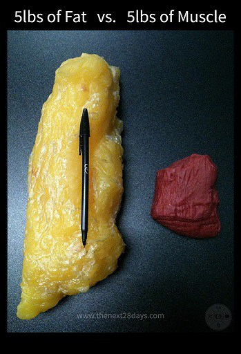 Muscle Weighs More than Fat Five Pounds
