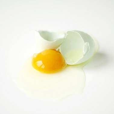 what is egg white protein albumen shell yolk parts