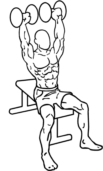 Everkinetic seated overhead shoulder dumbbell press illustration how to